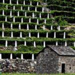 Il terrazzamento: linee guida per il recupero