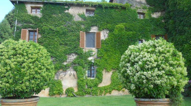 Quali piante scegliere per realizzare una parete verticale a casa ...