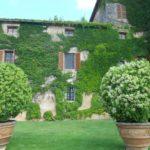 Quali piante scegliere per realizzare una parete verticale a casa nostra?