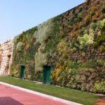 Alti livelli di gestione e manutenzione nella salvaguardia del verde verticale