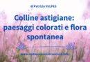 Colline astigiane: paesaggi colorati e flora spontanea